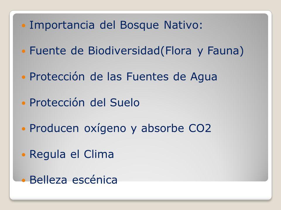 ¿Porqué se destruye el bosque nativo.