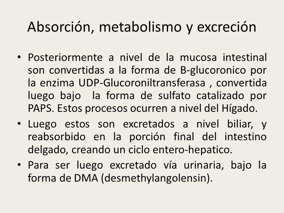 Absorción, metabolismo y excreción Posteriormente a nivel de la mucosa intestinal son convertidas a la forma de B-glucoronico por la enzima UDP-Glucor