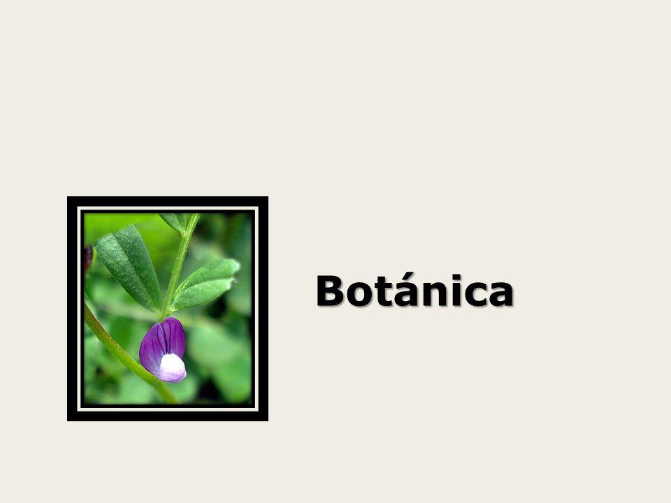 Isoflavonas Distribución: Las Isoflavonas se hayan presentes mayoritariamente en la familia de las leguminosas (Fabaceae), preferentemente en la subfamilia papilionideae, existen grandes revisiones de investigaciones sobre la presencia de Isoflavonas en esta subfamilia como la de Veitch (2007, 2009).