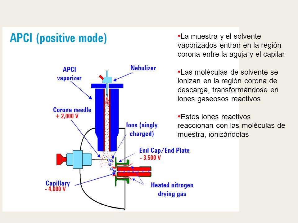La muestra y el solvente vaporizados entran en la región corona entre la aguja y el capilar Las moléculas de solvente se ionizan en la región corona d