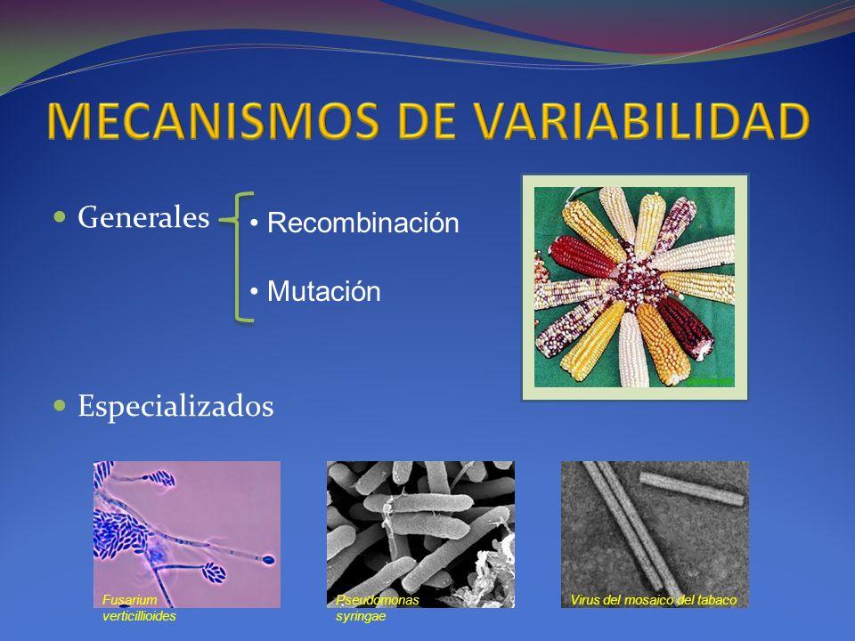 Generales Especializados Recombinación Mutación Fusarium verticillioides Pseudomonas syringae Virus del mosaico del tabaco