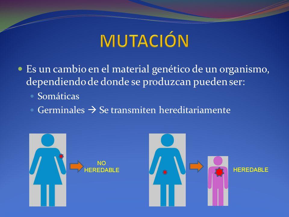Es un cambio en el material genético de un organismo, dependiendo de donde se produzcan pueden ser: Somáticas Germinales Se transmiten hereditariament