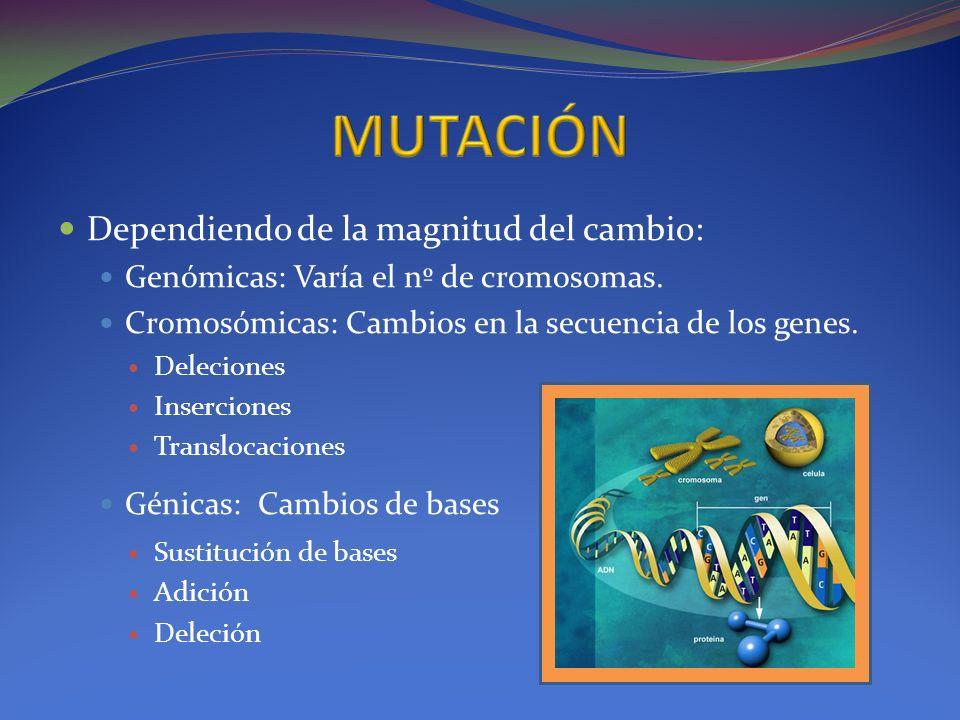 Dependiendo de la magnitud del cambio: Genómicas: Varía el nº de cromosomas. Cromosómicas: Cambios en la secuencia de los genes. Deleciones Insercione