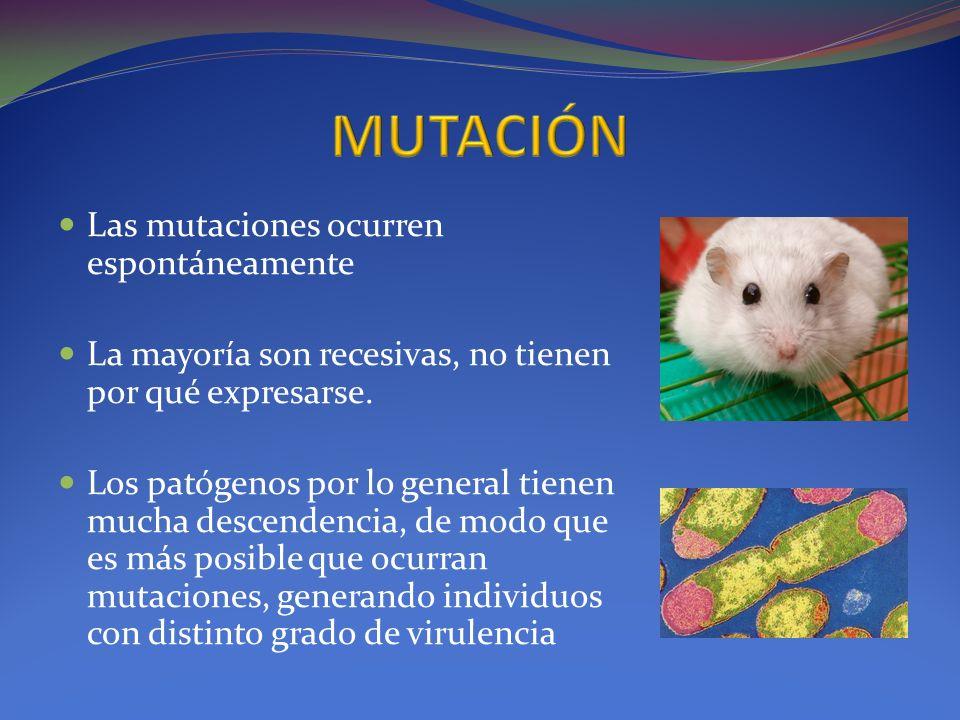 Las mutaciones ocurren espontáneamente La mayoría son recesivas, no tienen por qué expresarse. Los patógenos por lo general tienen mucha descendencia,
