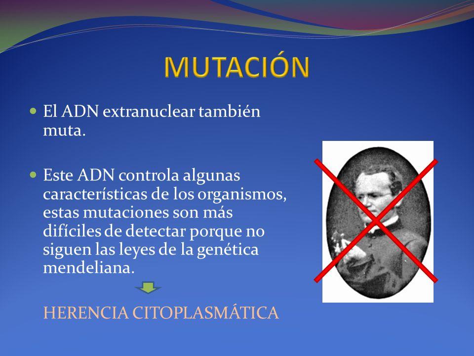 El ADN extranuclear también muta. Este ADN controla algunas características de los organismos, estas mutaciones son más difíciles de detectar porque n