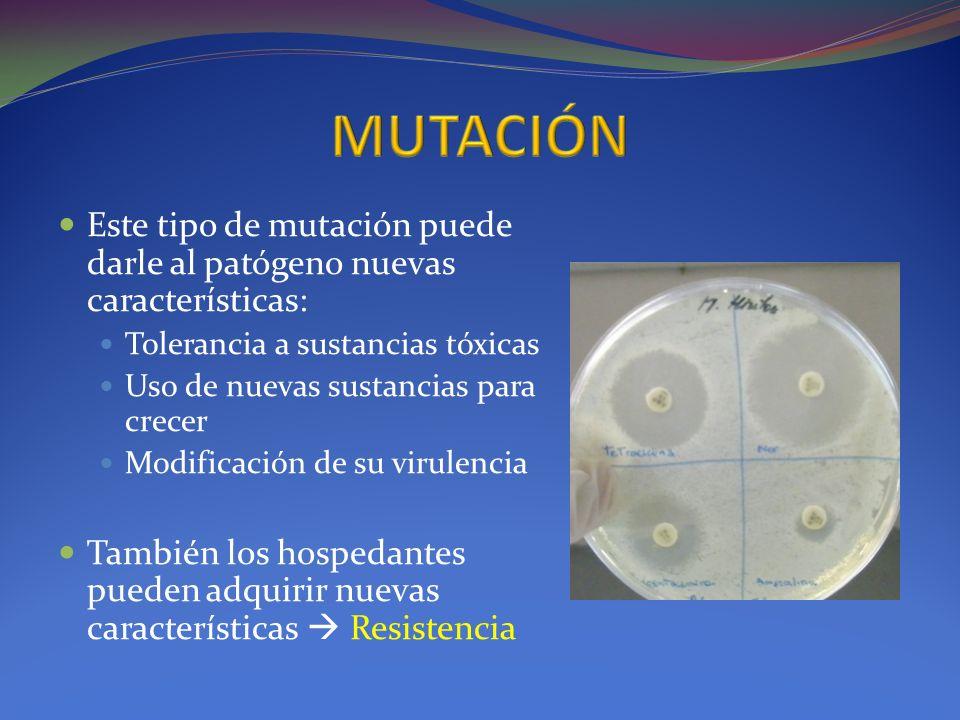 Este tipo de mutación puede darle al patógeno nuevas características: Tolerancia a sustancias tóxicas Uso de nuevas sustancias para crecer Modificació