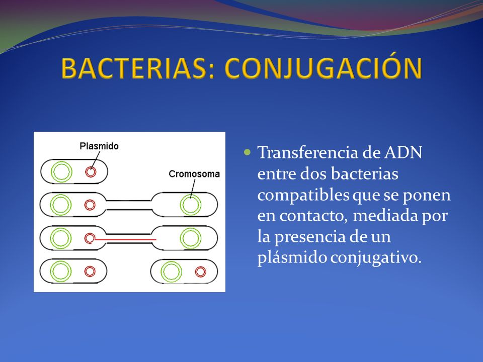 Transferencia de ADN entre dos bacterias compatibles que se ponen en contacto, mediada por la presencia de un plásmido conjugativo.