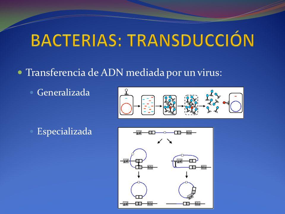 Transferencia de ADN mediada por un virus: Generalizada Especializada