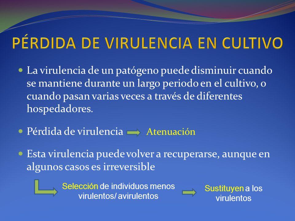 La virulencia de un patógeno puede disminuir cuando se mantiene durante un largo periodo en el cultivo, o cuando pasan varias veces a través de difere