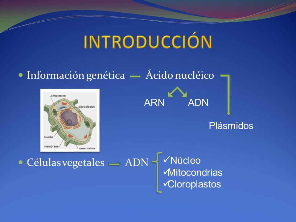 Información genética Ácido nucléico Células vegetales ADN ARNADN Plásmidos Núcleo Mitocondrias Cloroplastos