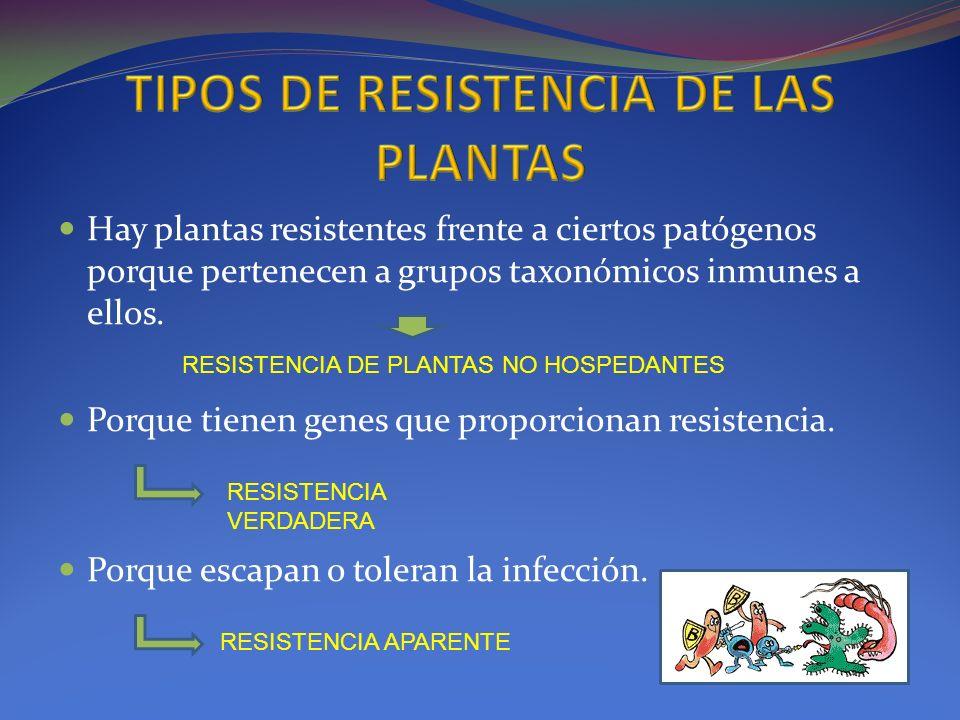 Hay plantas resistentes frente a ciertos patógenos porque pertenecen a grupos taxonómicos inmunes a ellos. Porque tienen genes que proporcionan resist