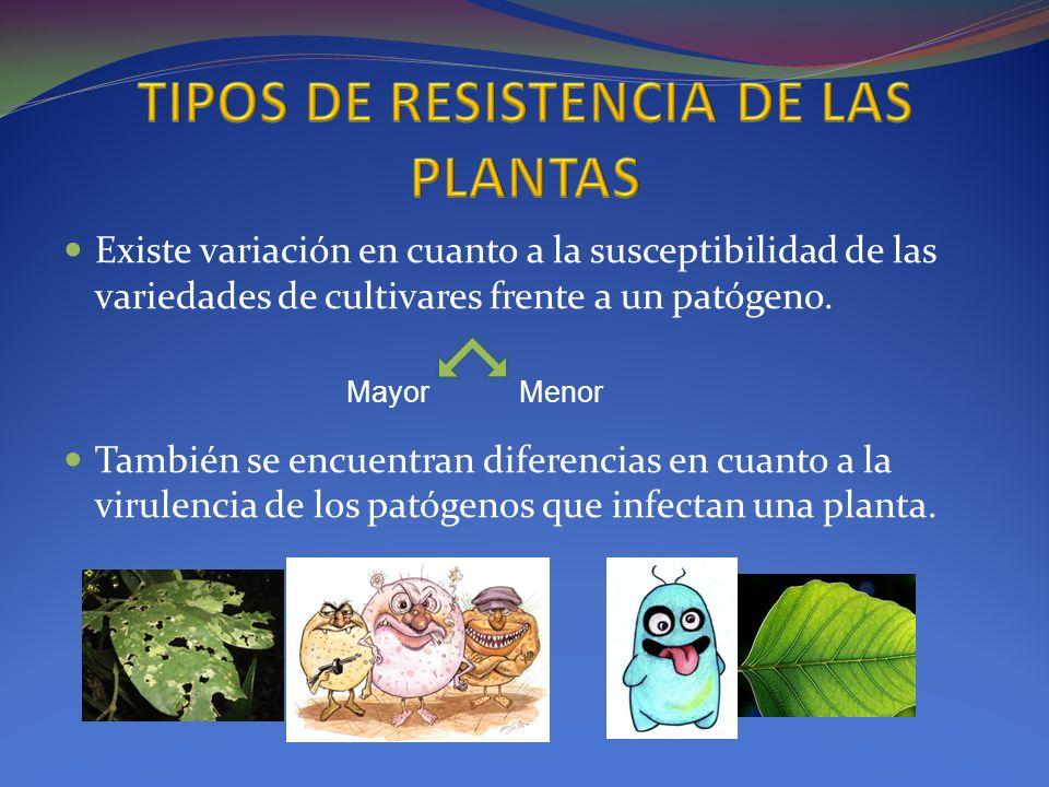 Existe variación en cuanto a la susceptibilidad de las variedades de cultivares frente a un patógeno. También se encuentran diferencias en cuanto a la