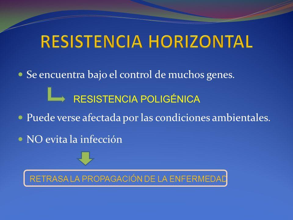 Se encuentra bajo el control de muchos genes. Puede verse afectada por las condiciones ambientales. NO evita la infección RESISTENCIA POLIGÉNICA RETRA