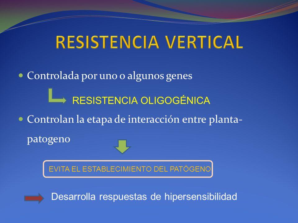 Controlada por uno o algunos genes Controlan la etapa de interacción entre planta- patogeno RESISTENCIA OLIGOGÉNICA EVITA EL ESTABLECIMIENTO DEL PATÓG