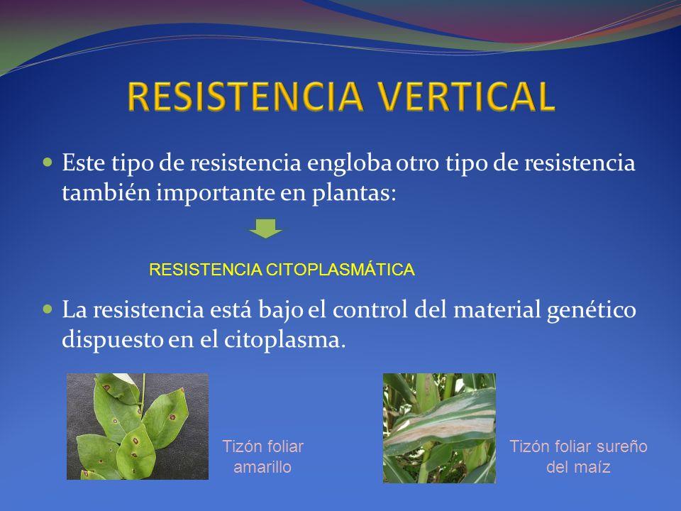 Este tipo de resistencia engloba otro tipo de resistencia también importante en plantas: La resistencia está bajo el control del material genético dis
