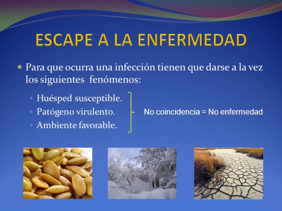 Para que ocurra una infección tienen que darse a la vez los siguientes fenómenos: Huésped susceptible. Patógeno virulento. Ambiente favorable. No coin