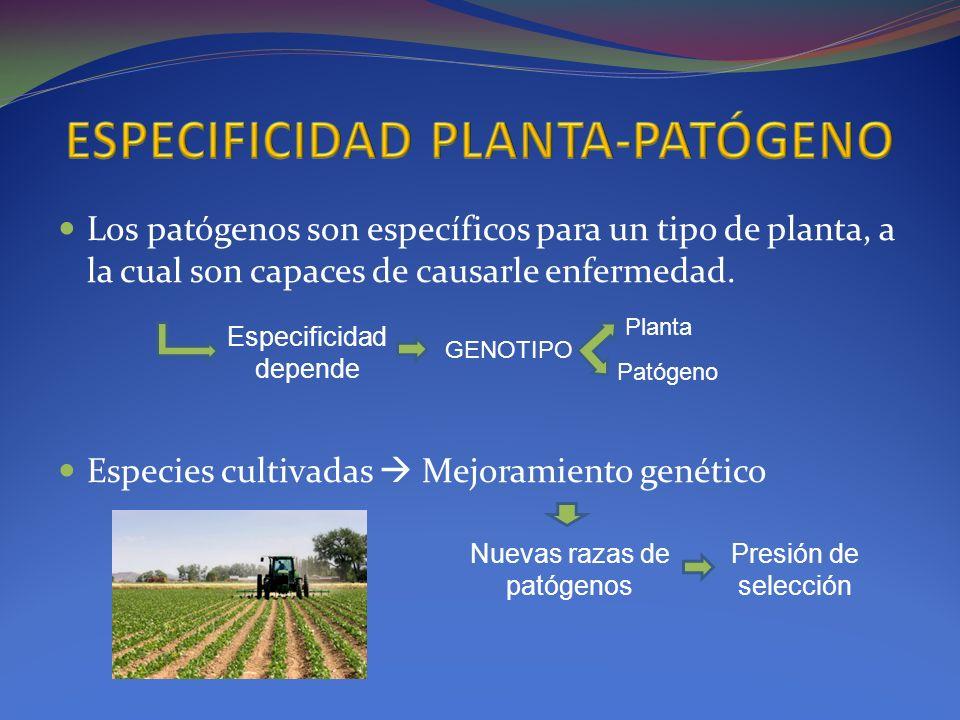Los patógenos son específicos para un tipo de planta, a la cual son capaces de causarle enfermedad. Especies cultivadas Mejoramiento genético Especifi