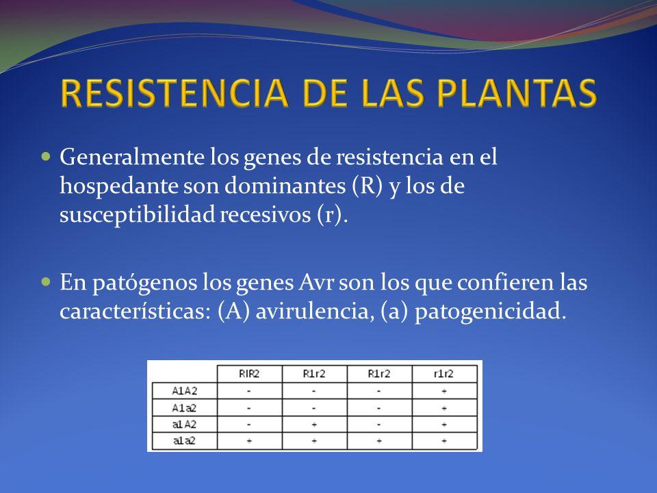 Generalmente los genes de resistencia en el hospedante son dominantes (R) y los de susceptibilidad recesivos (r). En patógenos los genes Avr son los q