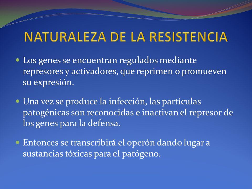 Los genes se encuentran regulados mediante represores y activadores, que reprimen o promueven su expresión. Una vez se produce la infección, las partí