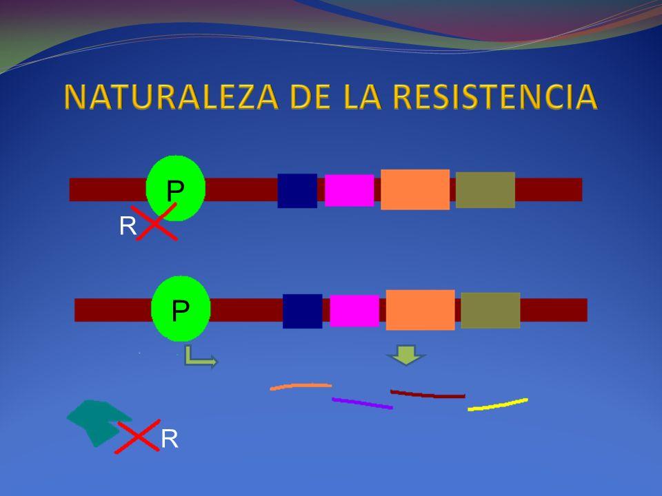 P P R R