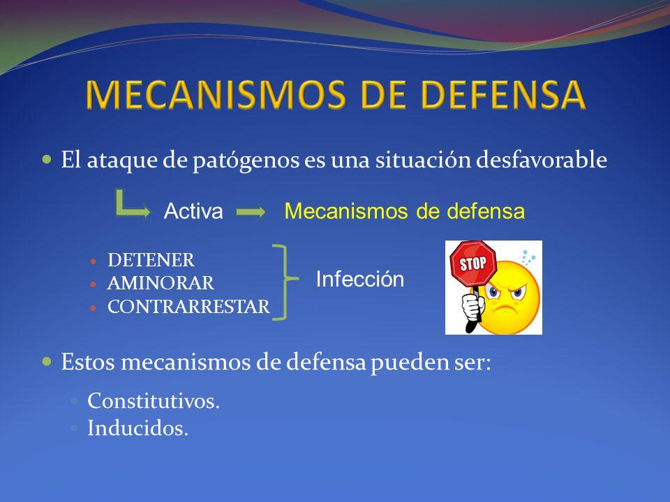El ataque de patógenos es una situación desfavorable DETENER AMINORAR CONTRARRESTAR Estos mecanismos de defensa pueden ser: Constitutivos. Inducidos.