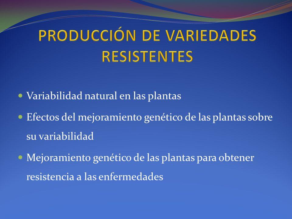 Variabilidad natural en las plantas Efectos del mejoramiento genético de las plantas sobre su variabilidad Mejoramiento genético de las plantas para o