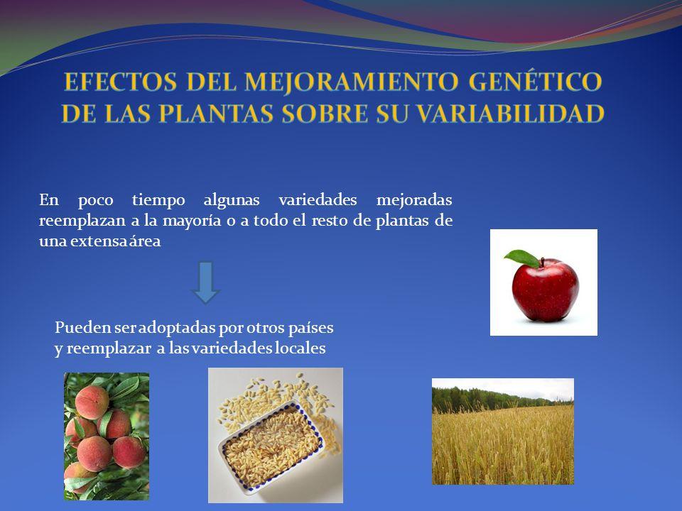 En poco tiempo algunas variedades mejoradas reemplazan a la mayoría o a todo el resto de plantas de una extensa área Pueden ser adoptadas por otros pa