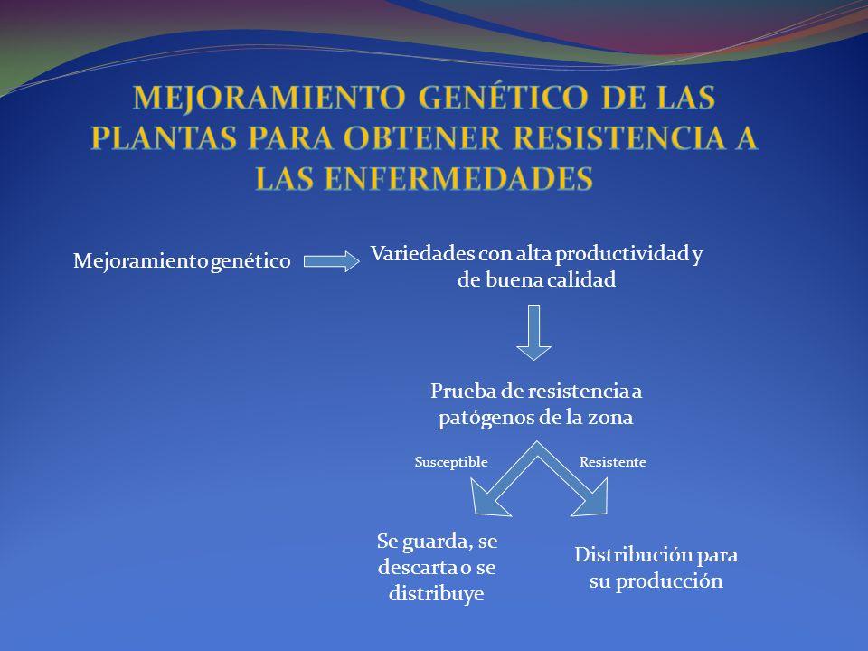 Mejoramiento genético Variedades con alta productividad y de buena calidad Prueba de resistencia a patógenos de la zona SusceptibleResistente Distribu