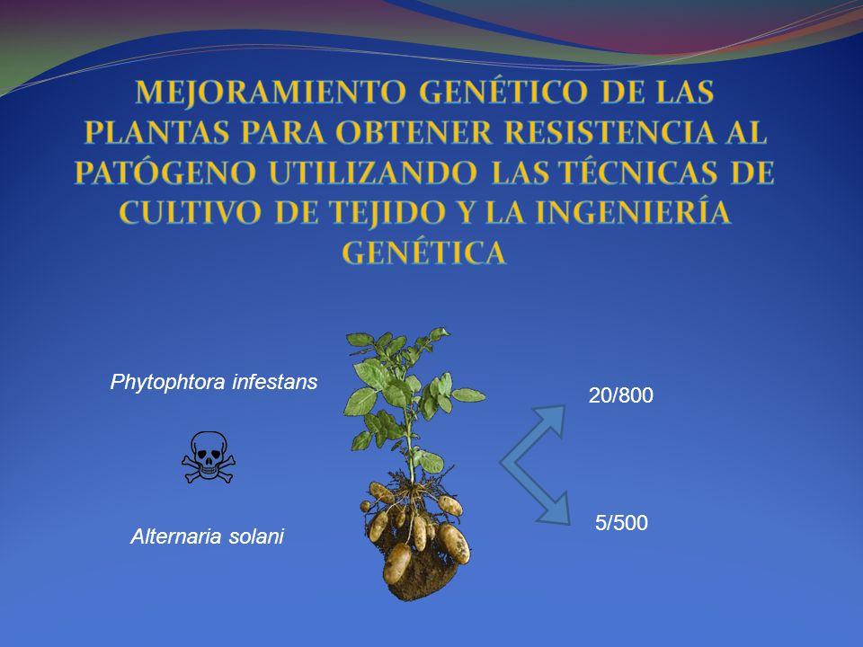 Phytophtora infestans Alternaria solani 5/500 20/800