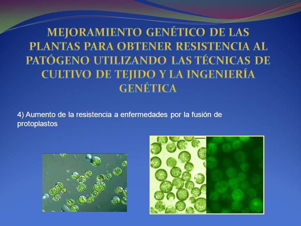 4) Aumento de la resistencia a enfermedades por la fusión de protoplastos
