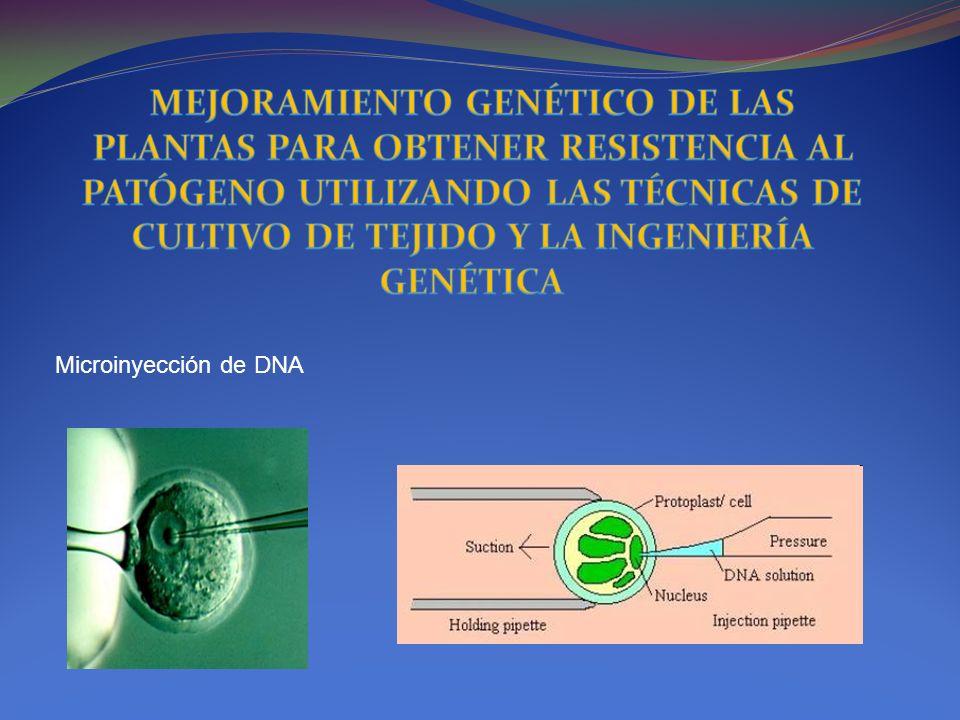 Microinyección de DNA