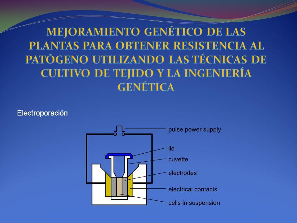 Electroporación