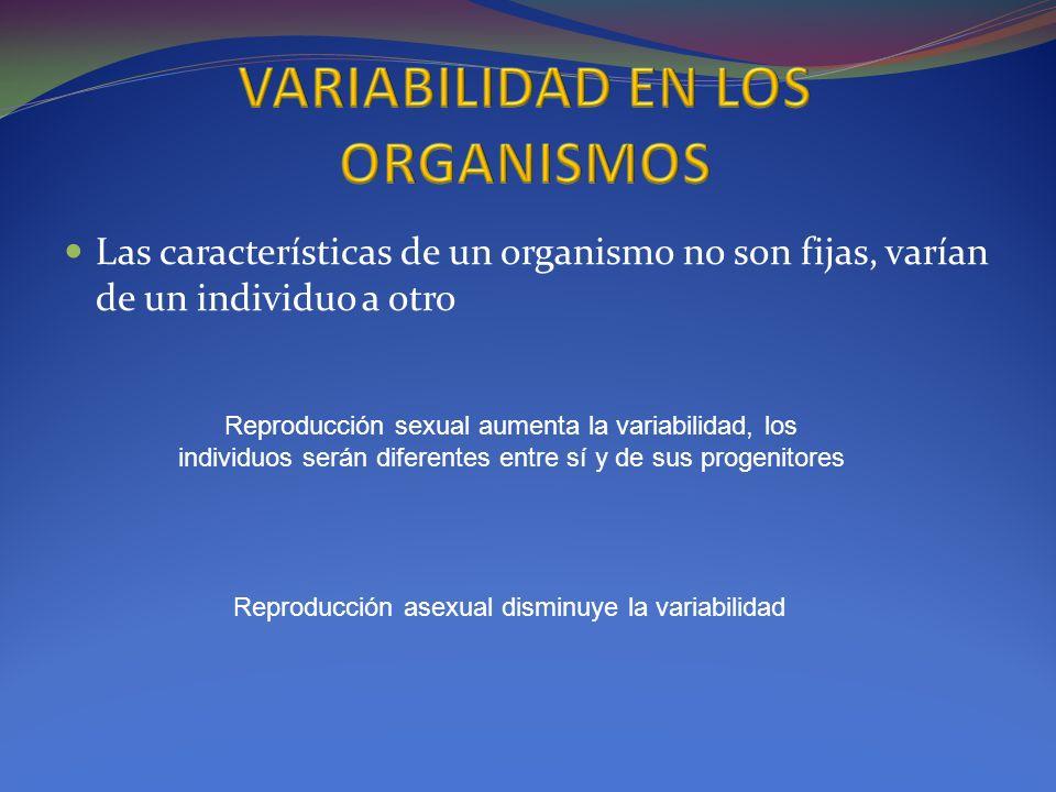 Las características de un organismo no son fijas, varían de un individuo a otro Reproducción sexual aumenta la variabilidad, los individuos serán dife