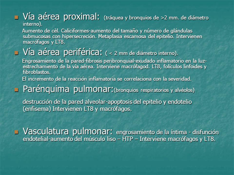 Vía aérea proximal: (tráquea y bronquios de >2 mm. de diámetro interno). Vía aérea proximal: (tráquea y bronquios de >2 mm. de diámetro interno). Aume