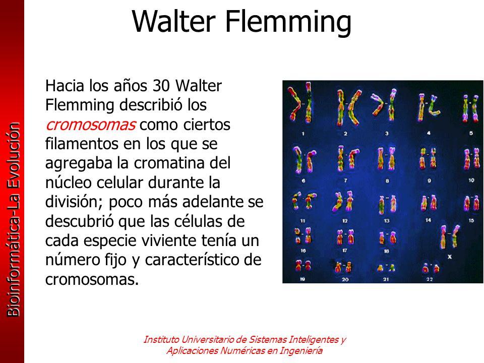 Bioinformática-La Evolución Instituto Universitario de Sistemas Inteligentes y Aplicaciones Numéricas en Ingeniería Hacia los años 30 Walter Flemming