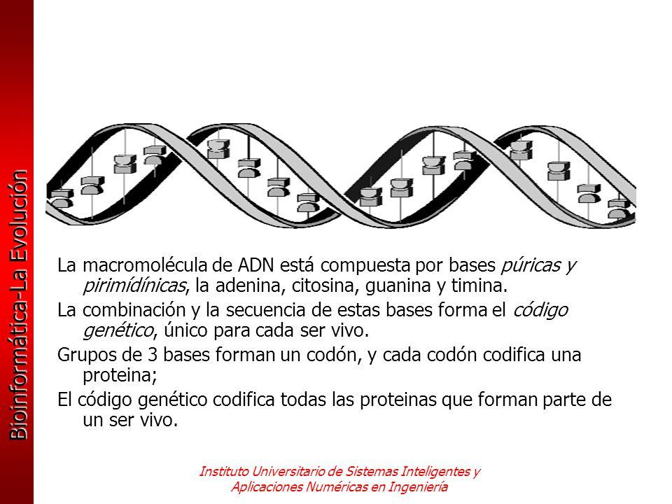 Bioinformática-La Evolución Instituto Universitario de Sistemas Inteligentes y Aplicaciones Numéricas en Ingeniería La macromolécula de ADN está compu