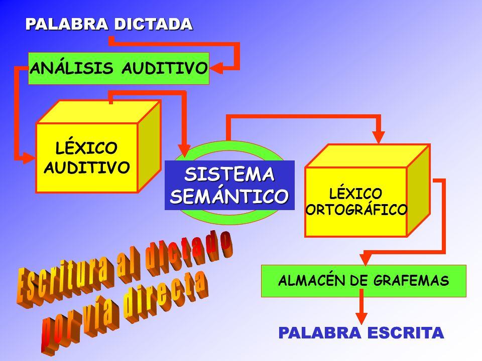 PALABRA DICTADA ANÁLISIS AUDITIVO LÉXICO AUDITIVO SISTEMASEMÁNTICO LÉXICO FONOLÓGICO ALMACÉN PRONUNCIACIÓN R.C.F.G ALMACÉN DE GRAFEMAS PALABRA ESCRITA PALABRA DICTADA ANÁLISIS AUDITIVO LÉXICO AUDITIVO SISTEMASEMÁNTICO LÉXICO FONOLÓGICO ALMACÉN PRONUNCIACIÓN R.C.F.G ALMACÉN DE GRAFEMAS PALABRA ESCRITA