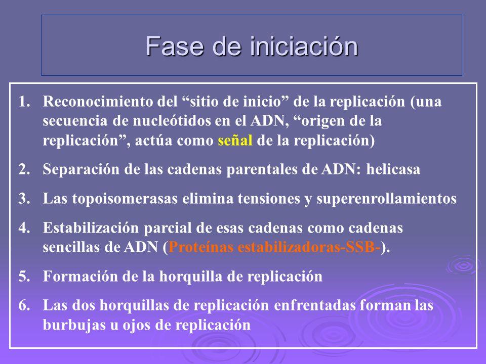 Duplicación del ADN en células procariotas 1)FASE DE INICIACIÓN 2)FASE DE ELONGACIÓN