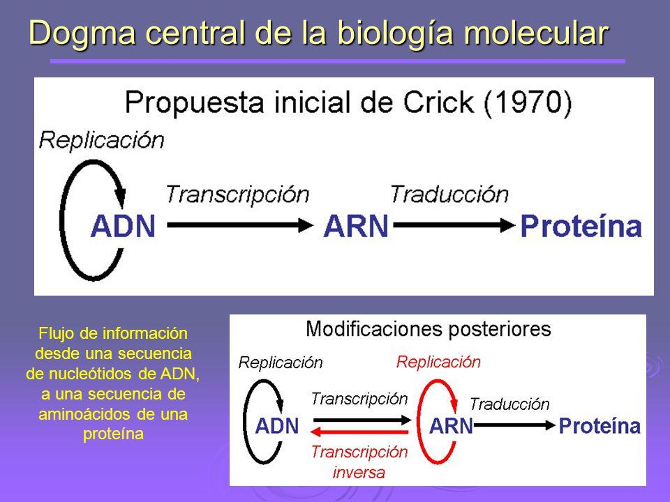 Transcripción (en sentido general): proceso de síntesis de una cadena de cualquier tipo de ARN que tiene la secuencia complementaria de una cadena de