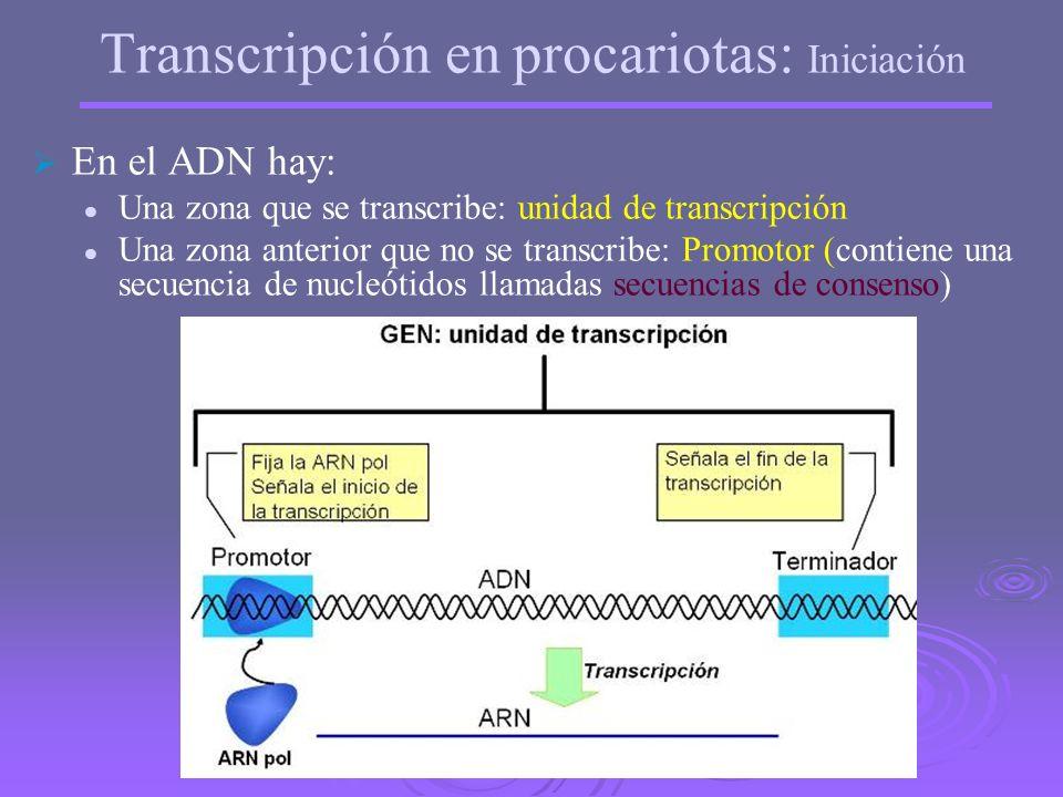 Mecanismo de la transcripción en procariotas Fases: Iniciación Iniciación Elongación o alargamiento Elongación o alargamiento Finalización Finalizació
