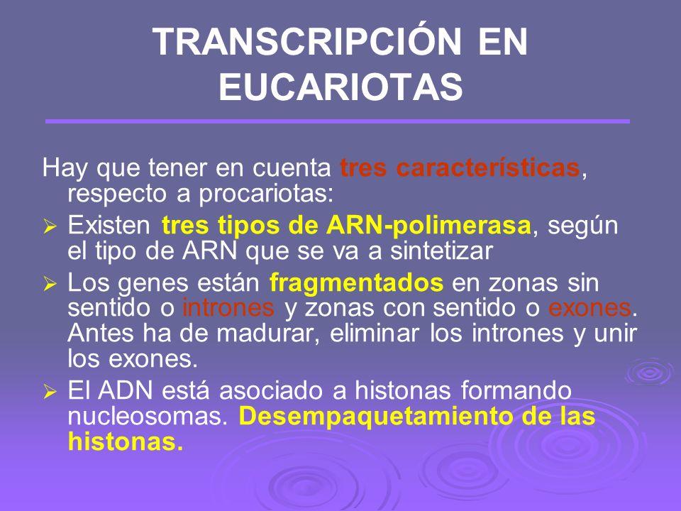 Transcripción en procariotas: Maduración Si lo que se forma es un ARNm no hay maduración, pero si se trata de un ARNt o ARNr hay procesos de corte y e