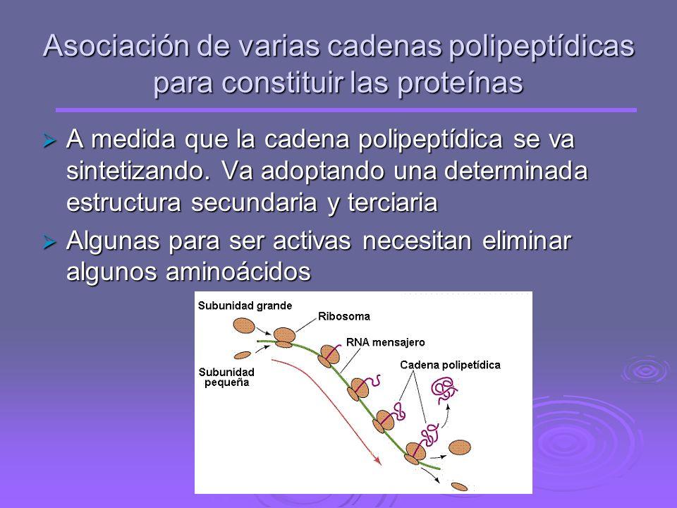 Ocurre cuando aparece uno de los codones de terminación (UAA, UAG, UGA ). En este momento un factor proteico de terminación (FR) se une al codón de te