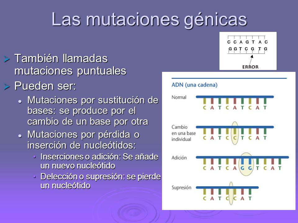 Según la extensión del material genético afectado: Mutaciones génicas: producen alteraciones en la secuencia de nucleótidos de un gen.Mutaciones génic