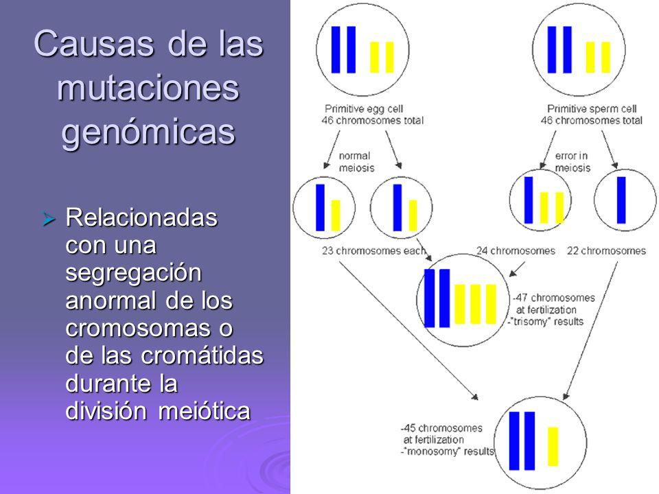 Causas de las mutaciones génicas Errores de lectura durante la replicación del ADN Errores de lectura durante la replicación del ADN Lesiones fortuita