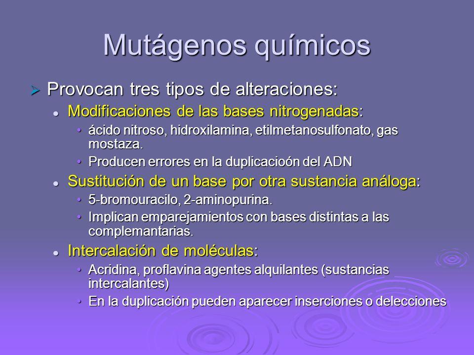 Agentes mutagénicos Los agentes mutagénicos son factores que aumentan sensiblemente la frecuencia de mutación en los seres vivos. Actúan alterando o d