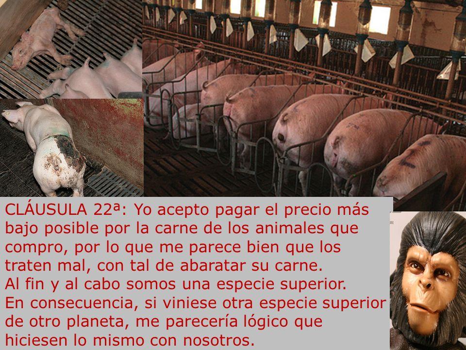 CLÁUSULA 21ª: Yo acepto que los transgénicos se expandan por todo el planeta, y que las multinacionales agroalimentarias que patentan seres vivos acum