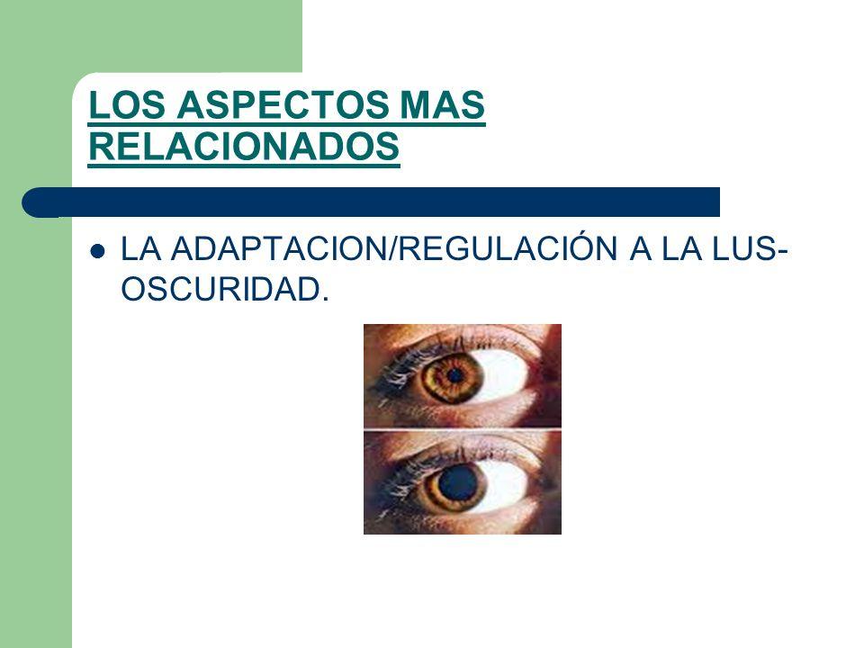 LOS ASPECTOS MAS RELACIONADOS LA ADAPTACION/REGULACIÓN A LA LUS- OSCURIDAD.