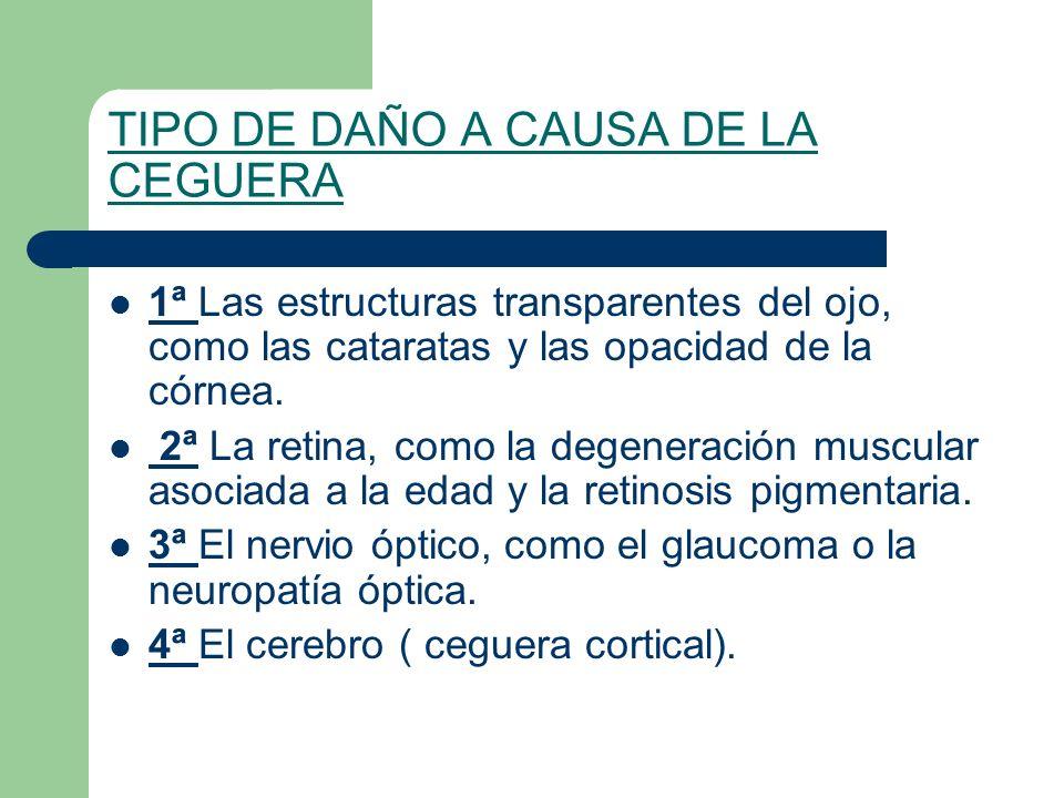 TIPO DE DAÑO A CAUSA DE LA CEGUERA 1ª Las estructuras transparentes del ojo, como las cataratas y las opacidad de la córnea. 2ª La retina, como la deg