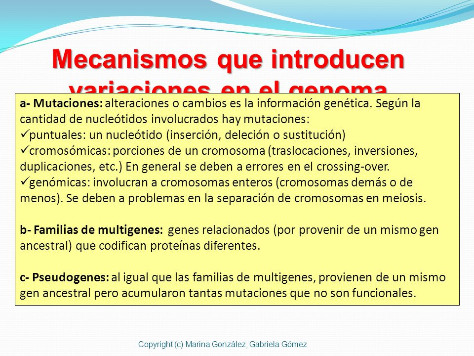 Mecanismos que introducen variaciones en el genoma a- Mutaciones: alteraciones o cambios es la información genética. Según la cantidad de nucleótidos