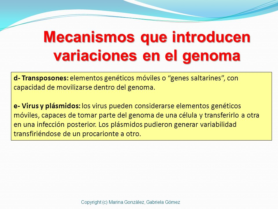 Mecanismos que introducen variaciones en el genoma d- Transposones: elementos genéticos móviles o genes saltarines, con capacidad de movilizarse dentr